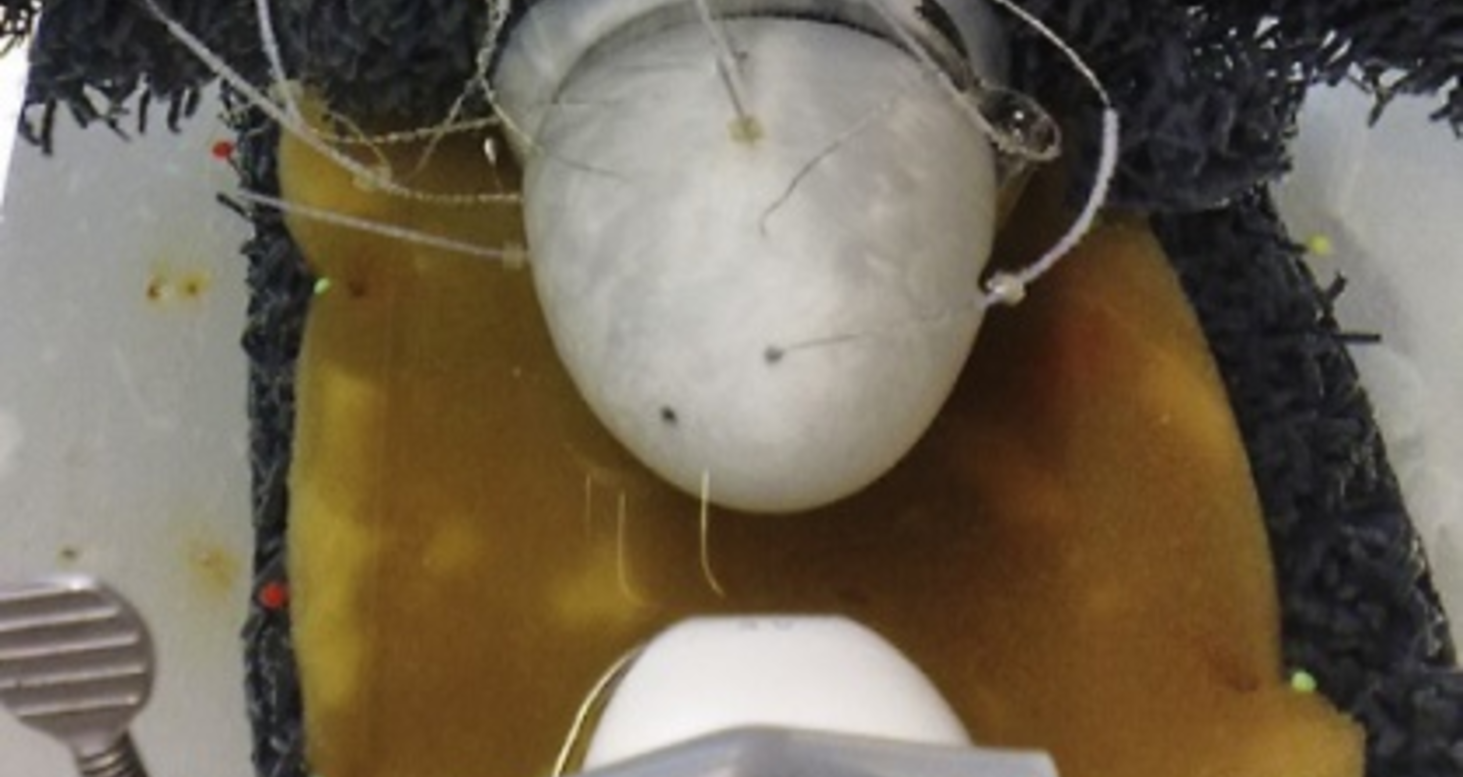 Venstre hjertekammer modell for voksne med krystaller som referanse