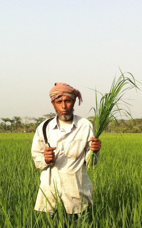 Mann i rismark, Bangladesh
