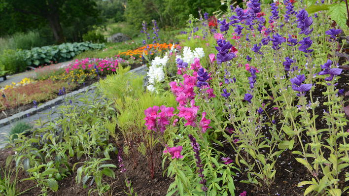 Fra hovedfeltet til sommerblomstene i Solåkeren i Botanisk hage.