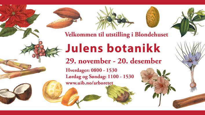 Julens botanikk