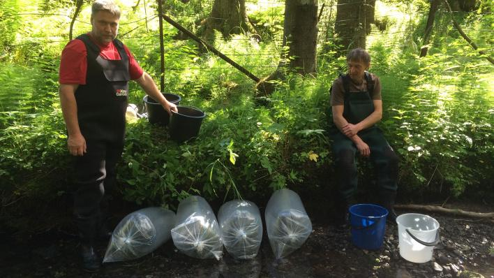 Two men with bags of juvenile salmon to be released to a river