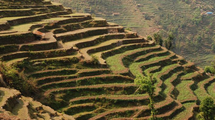 terrasser for matproduksjon