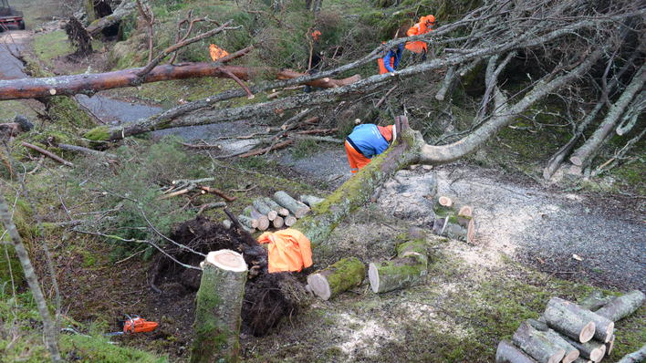 Clean-up after the storm in the robles valley.