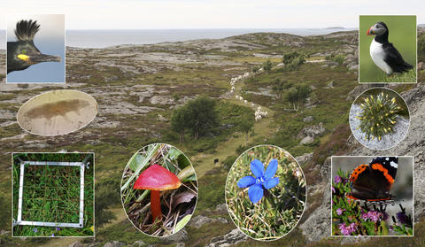 A cultural landscape with inset images of cormorant, tardigarde, sampling quadrat, red fungus, blue gentian, admiral butterfly, Grimmia moss, and puffin