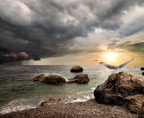 strand, hav, fugler og mørke skyer