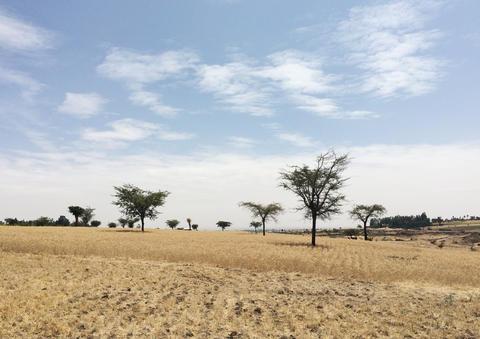 Ethiopia field