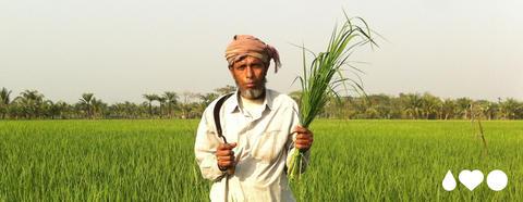 En mann med turban og hvit kjortel står på en grønn åker med en bunt grønt gress i hånden.