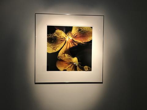 Bilde av pollenutstilling