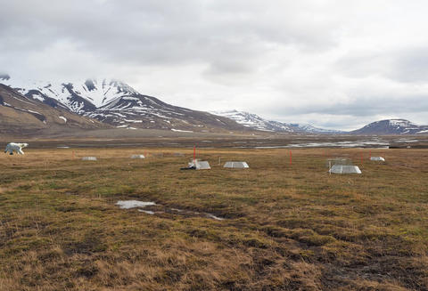 View of open-top chambers on a flat grassy area of Svalbard