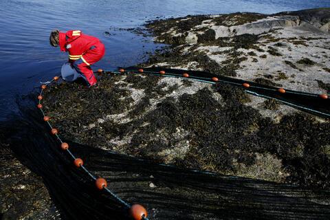 Student fra Institutt for biologi ute i felten på UIBs marine forskningsstasjon på Espegrend