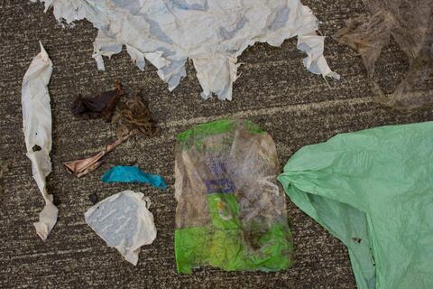 plast i Gåsenebbhval