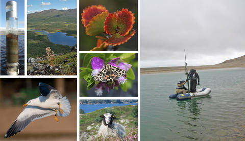 A montage of images indicative of EECRG research activities