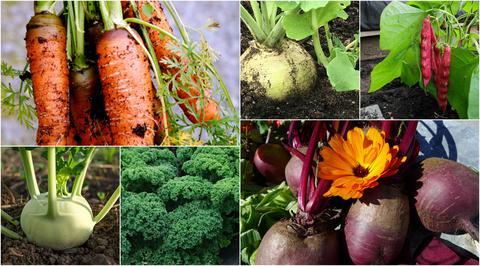 Grønnsaker fra Botanisk hage