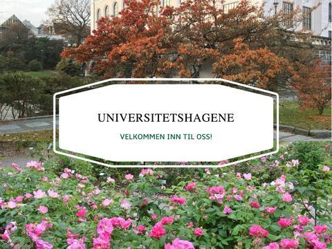 Universitetshagene