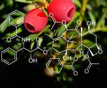 Barlindtre med to raude bær med kjemisk formel i framgrunnen.