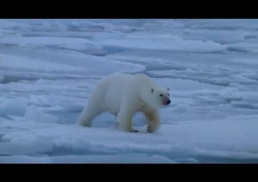 Trailer - Chasing the polar microbes