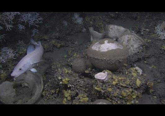 Scientists absorbed by deep-sea sponges - futuris