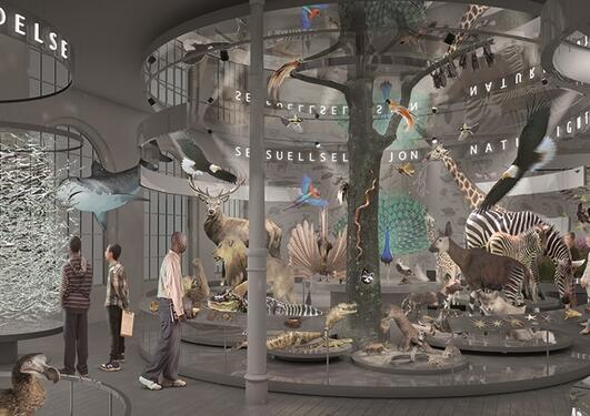 illustrasjon over et rom med utstillinger av dyr, fugler, fisker.