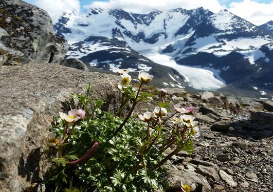 Blomster i Joutunheimen