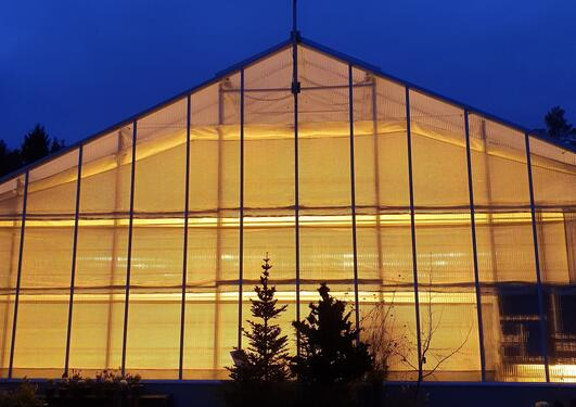 Glasshouses at the University Gardens