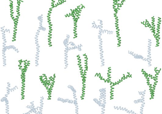 Green PARP representations in the attached figure were partially flattened in order to reveal the branching structure as-good-as-possible, while the gray representations show simple projections from 3D to 2D.