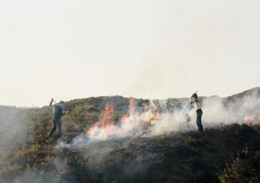 Lynghei i brann