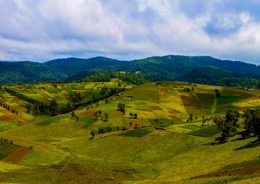 Agri forest landscapes