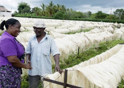 Tidligere PhD Akwilina Kayumba hilser på venn og arbeider Shabani Ngozi der han jobber ved tørkestativene på Pangawe-plantasjen i Tanzania.