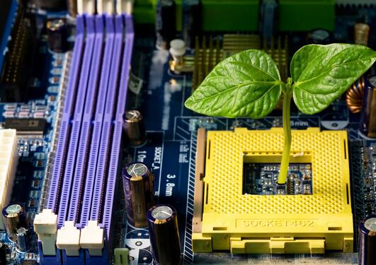 hardware with green plant