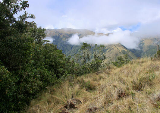 A view of the Andean treeline with trees on the left and grassland on the right