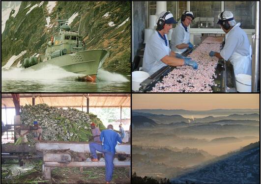 Bilde fra ulike steder; fartøy, fiskefabrikk, sisalfabrikk, forurensing i by