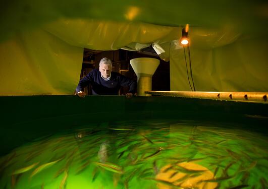 Professor Arne Johannessen lent over en fisketank.
