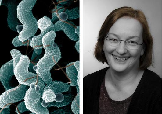 Nina Langeland og bakterier