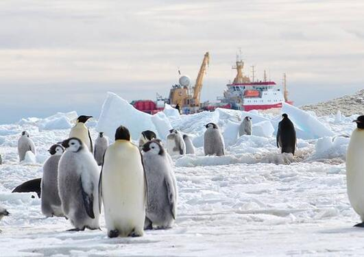 bat_pingvin