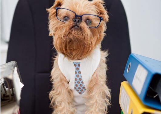 Bildet viser en hund med briller ved et skrivebord.