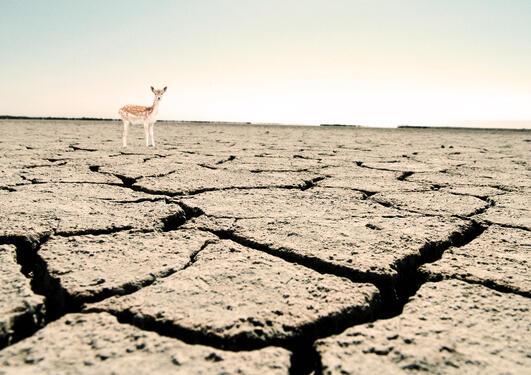 Illustrasjon VIT212 Klimaendringer