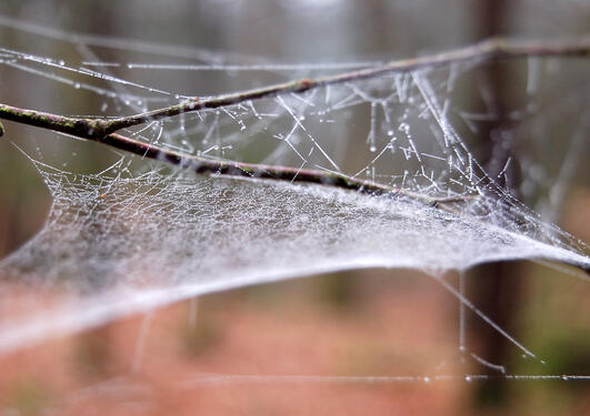 Photograph of a spiderweb connected to twigs.