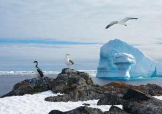 Polarforskning