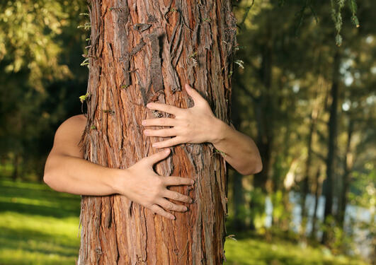 Arms hugging tree