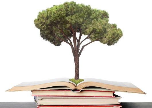 A tree inside a book.