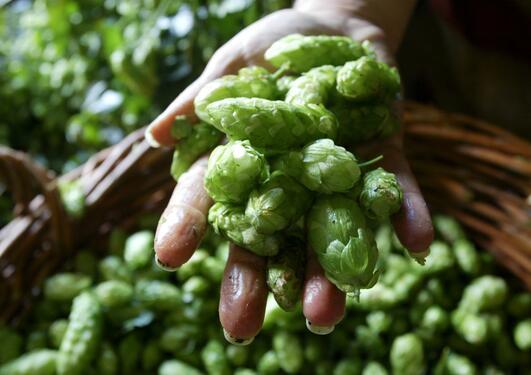 En bonde viser frem grønnsaker i hånden, illustrasjonsfoto brukt ifm åpningsforedraget på Bergen Summer Research School 2014.