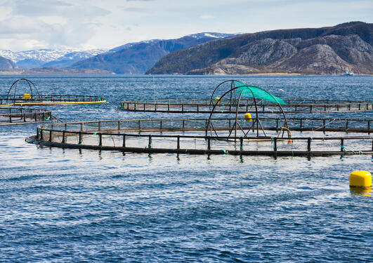 SOUGHT-AFTER EDUCATION. The Master's programme in aquaculture and seafood will provide students with a broad education in biology, as well as a specialisation in marine food production. Photo: Colourbox.com
