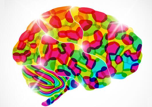 Fargerik hjerne