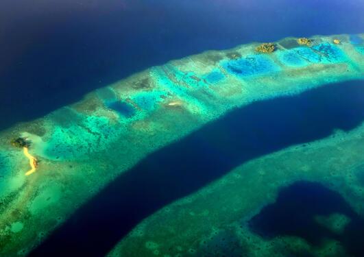 Dette bildet viser et korallrev i Marovolagunen på Salomonøyene i Stillehavet