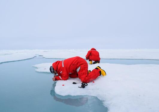 Arctic field work