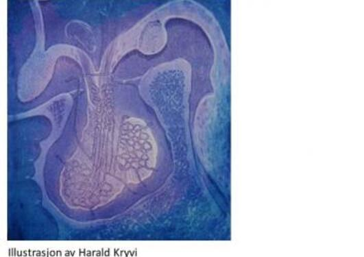 Endokrin illustrasjon