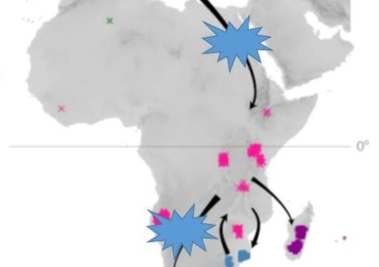 Erica biogeographic scenario