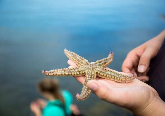 A student from the University of Bergen holds a starfish found in the waters close to Bergen, Norway.