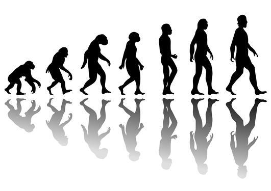 Evolusjon illustrasjon