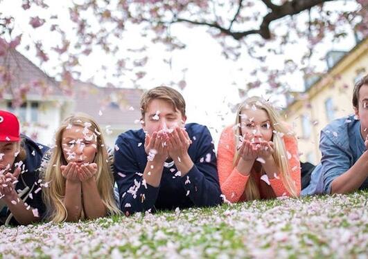 Fadderstyrets fem medlemmer ligger i gresset under et kirsebærtre og blåser kronblader mot fotografen